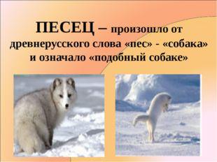 ПЕСЕЦ – произошло от древнерусского слова «пес» - «собака» и означало «подобн