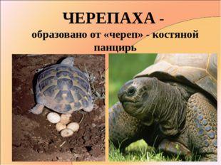ЧЕРЕПАХА - образовано от «череп» - костяной панцирь
