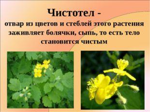 Чистотел - отвар из цветов и стеблей этого растения заживляет болячки, сыпь,