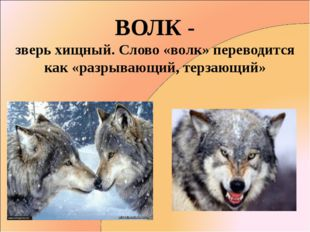 ВОЛК - зверь хищный. Слово «волк» переводится как «разрывающий, терзающий»