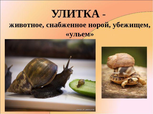 УЛИТКА - животное, снабженное норой, убежищем, «ульем»