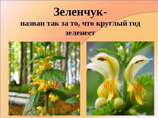 Зеленчук- назван так за то, что круглый год зеленеет