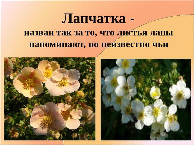 Лапчатка - назван так за то, что листья лапы напоминают, но неизвестно чьи