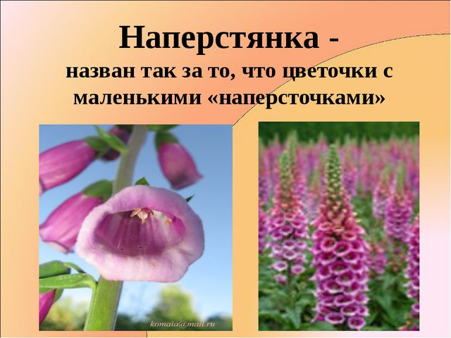 Наперстянка - назван так за то, что цветочки с маленькими «наперсточками»