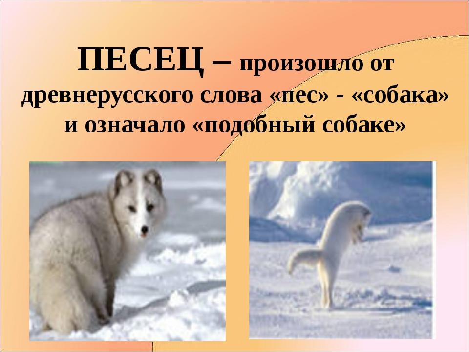 ПЕСЕЦ – произошло от древнерусского слова «пес» - «собака» и означало «подобн...