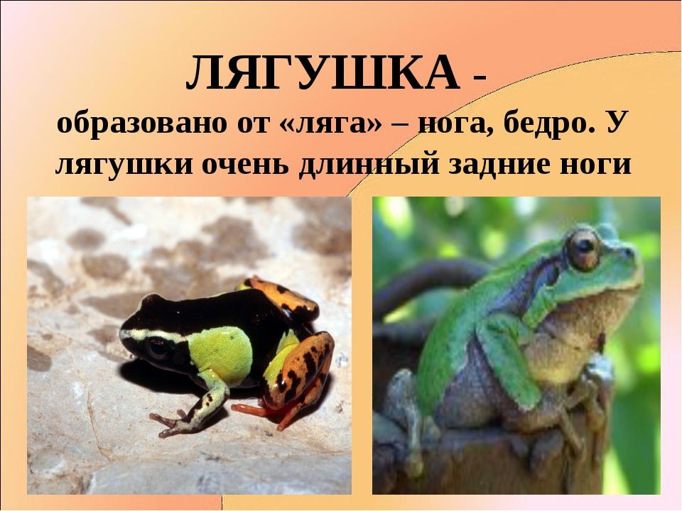ЛЯГУШКА - образовано от «ляга» – нога, бедро. У лягушки очень длинный задние...