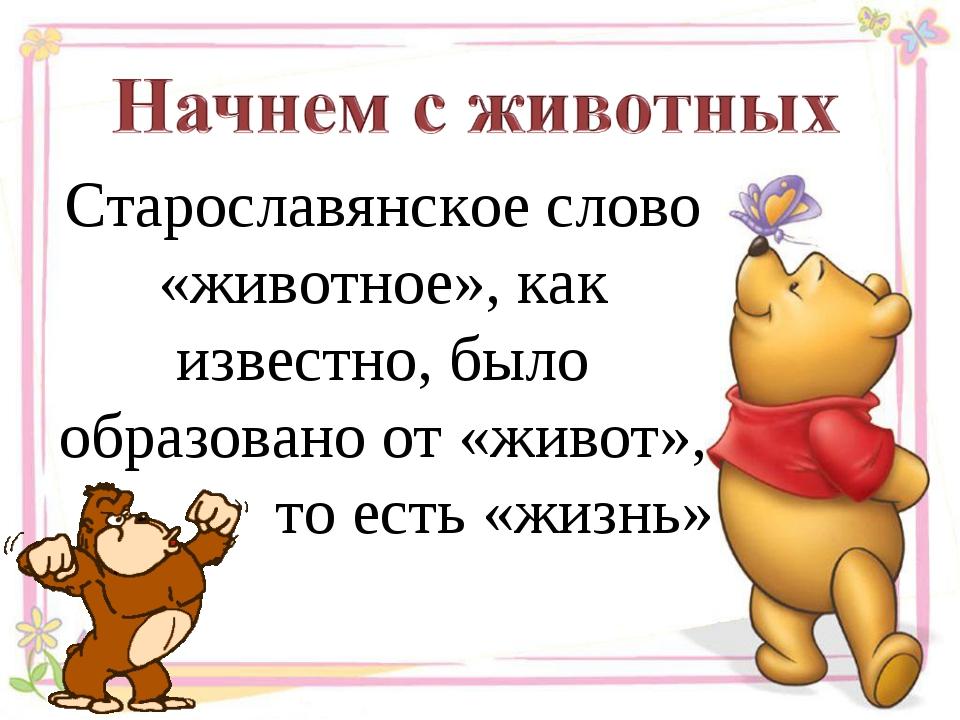 Старославянское слово «животное», как известно, было образовано от «живот», т...