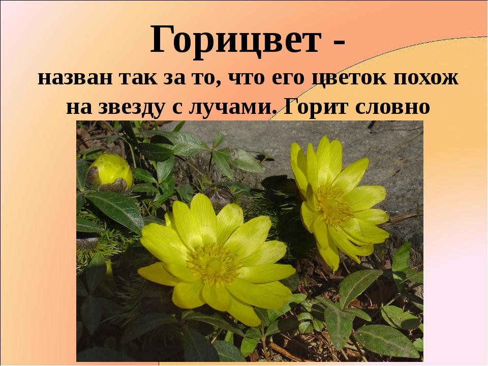 Горицвет - назван так за то, что его цветок похож на звезду с лучами. Горит с...
