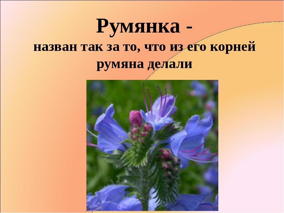 Румянка - назван так за то, что из его корней румяна делали