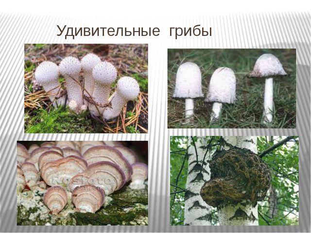 Удивительные грибы