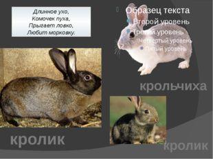 Длинное ухо, Комочек пуха, Прыгает ловко, Любит морковку. крольчиха кролик кр