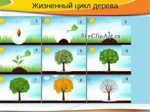 1 2 3 4 5 6 7 8 9 Жизненный цикл дерева