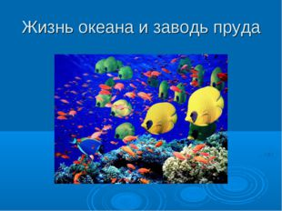 Жизнь океана и заводь пруда