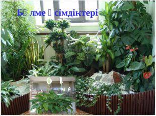 Бөлме өсімдіктері