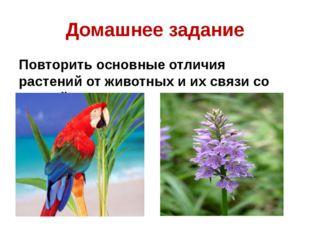 Домашнее задание Повторить основные отличия растений от животных и их связи с