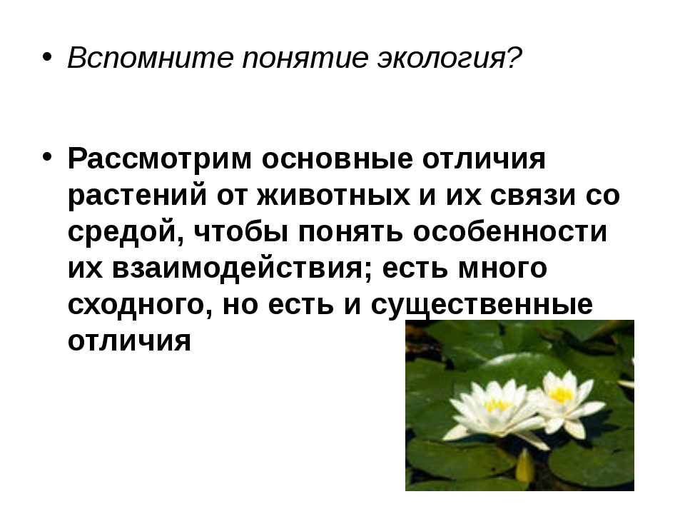 Вспомните понятие экология? Рассмотрим основные отличия растений от животных...