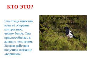 КТО ЭТО? Эта птица известна всем её оперение контрастное, черно- белое. Она п