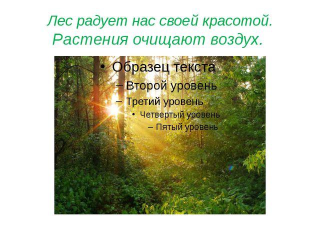 Лес радует нас своей красотой. Растения очищают воздух.