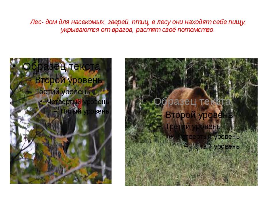 Лес- дом для насекомых, зверей, птиц, в лесу они находят себе пищу, укрываютс...