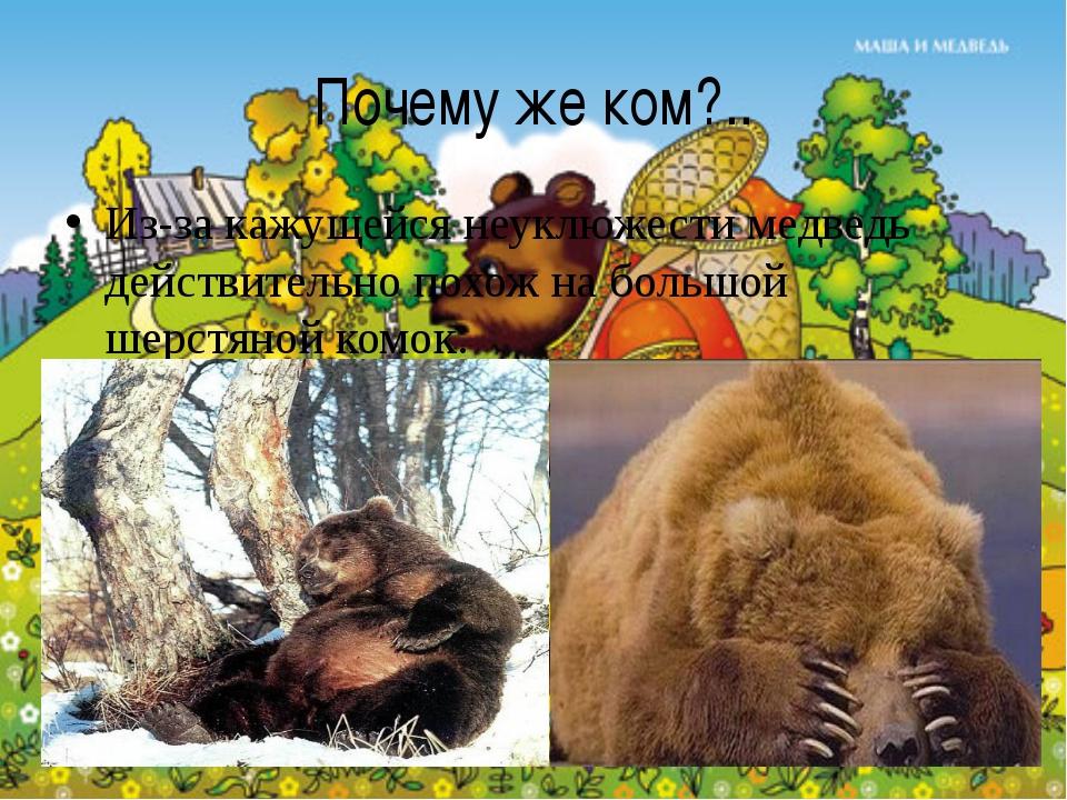 Почему же ком?.. Из-за кажущейся неуклюжести медведь действительно похож на б...
