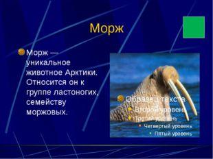 Морж Морж — уникальное животное Арктики. Относится он к группе ластоногих, се