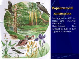 Воронежский заповедник Был основан в 1927 г. на стыке двух областей Липецкой