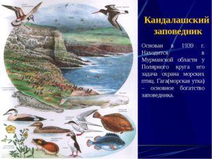 Кандалашский заповедник Основан в 1939 г. Находится в Мурманской области у По