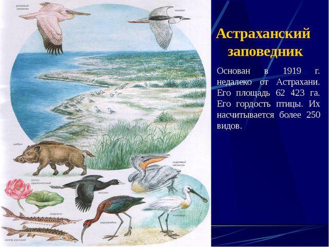 Астраханский заповедник Основан в 1919 г. недалеко от Астрахани. Его площадь...