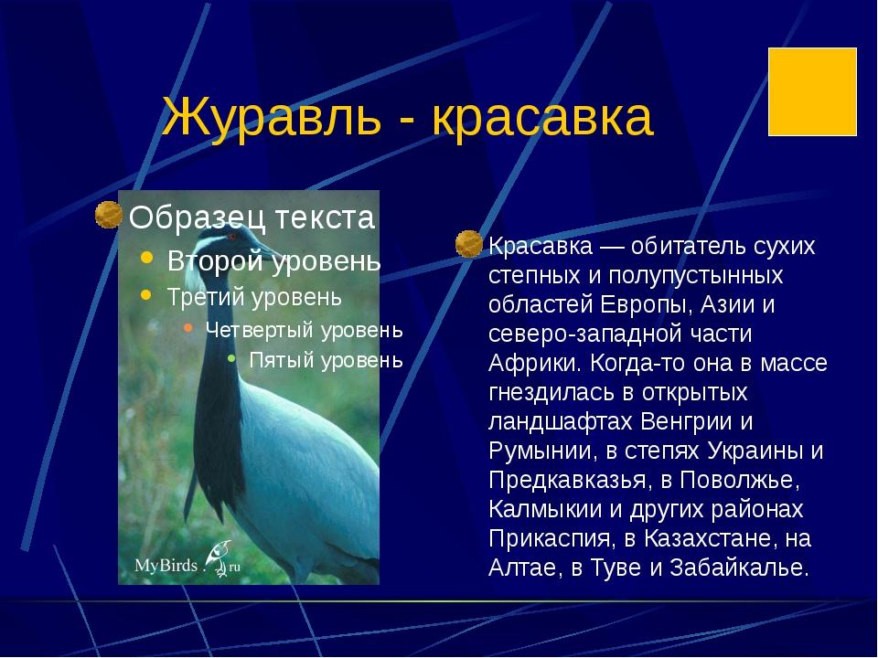 Журавль - красавка Красавка — обитатель сухих степных и полупустынных областе...