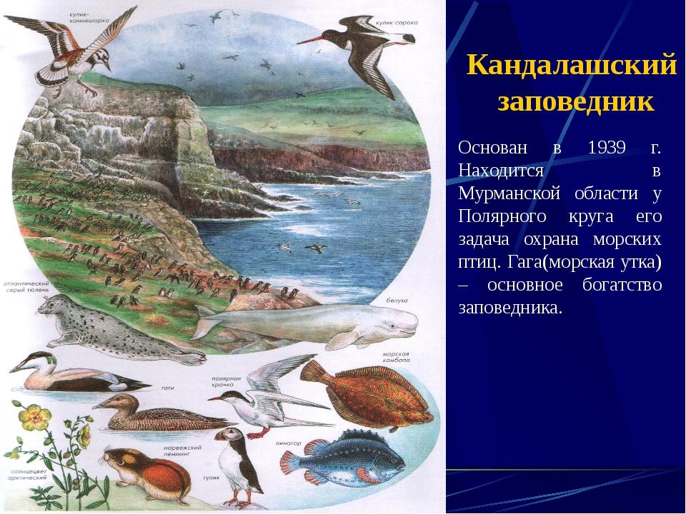 Кандалашский заповедник Основан в 1939 г. Находится в Мурманской области у По...