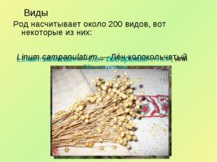 Виды Род насчитывает около 200 видов, вот некоторые из них: Linum sibiricum