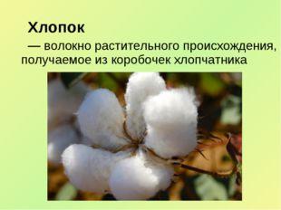 Хлопок — волокно растительного происхождения, получаемое из коробочек хлопч