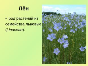 Лён род растений из семейства льновые (Linaceae).