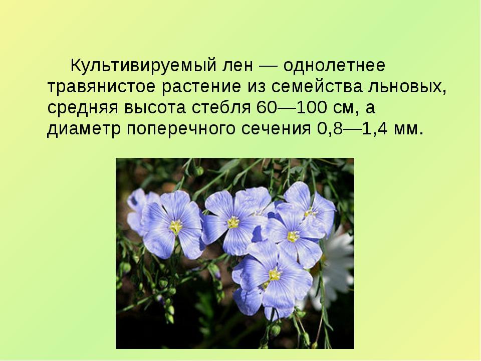 Культивируемый лен— однолетнее травянистое растение из семейства льн...