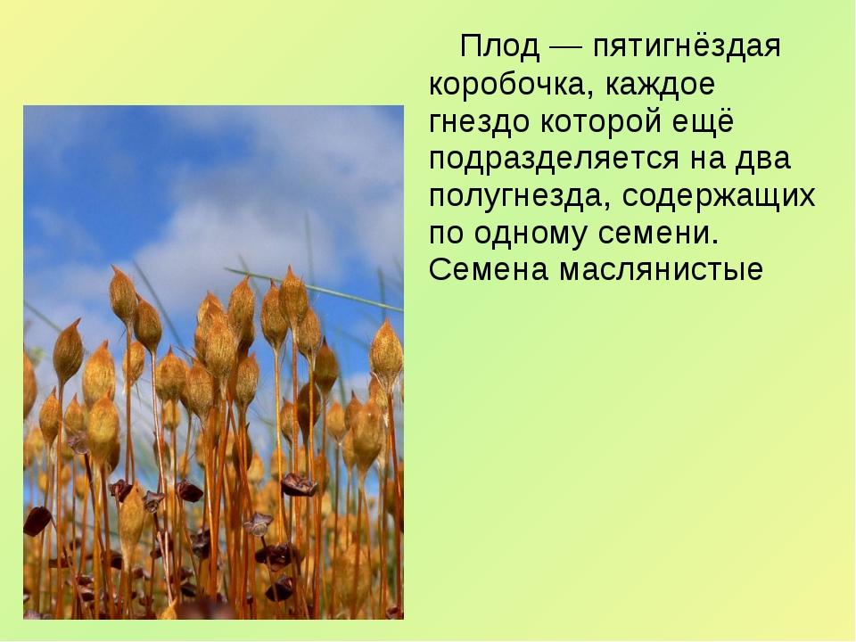 Плод— пятигнёздая коробочка, каждое гнездо которой ещё подразделяется на дв...