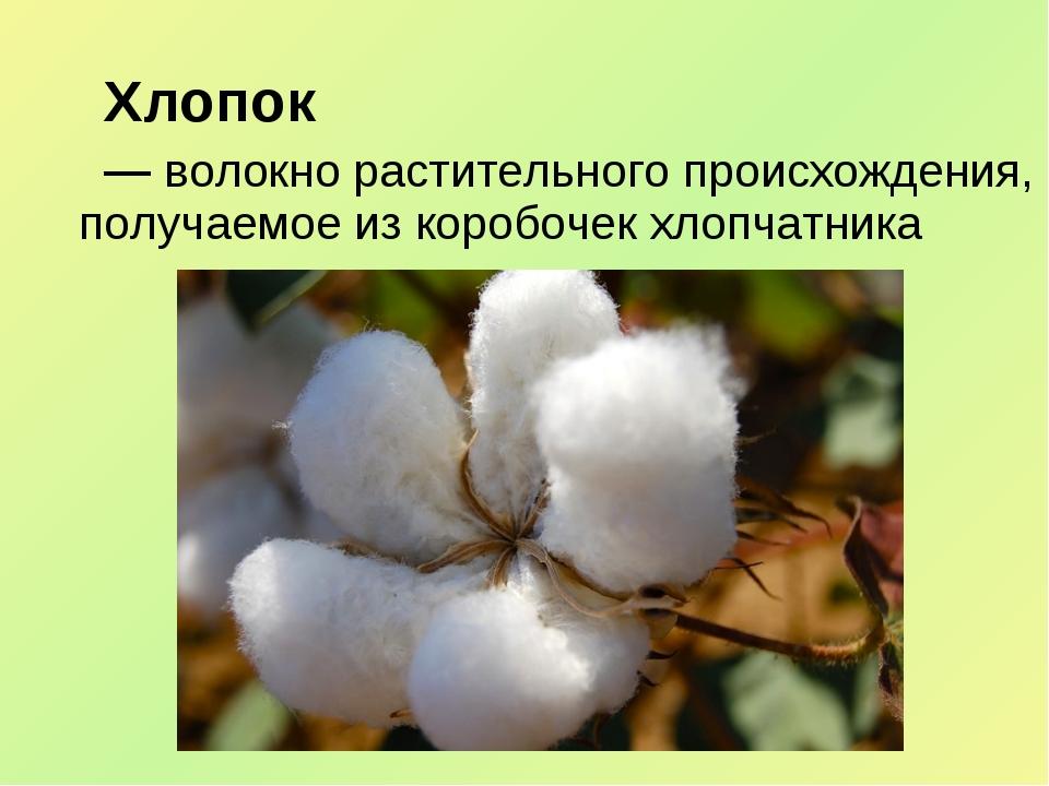 Хлопок — волокно растительного происхождения, получаемое из коробочек хлопч...