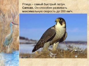 Птица – самый быстрый летун. Сапсан.Он способен развивать максимальную скор