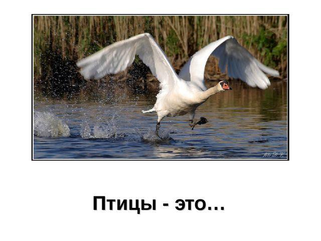Птицы - это…