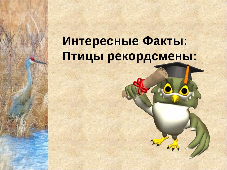 Интересные Факты: Птицы рекордсмены: