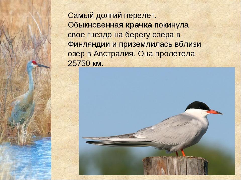 Самый долгий перелет. Обыкновеннаякрачкапокинула свое гнездо на берегу озер...
