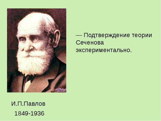 — Подтверждение теории Сеченова экспериментально. И.П.Павлов 1849-1936