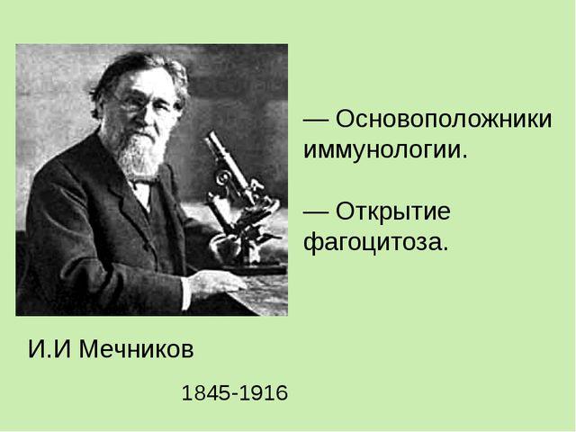 — Основоположники иммунологии. — Открытие фагоцитоза. И.И Мечников 1845-1916