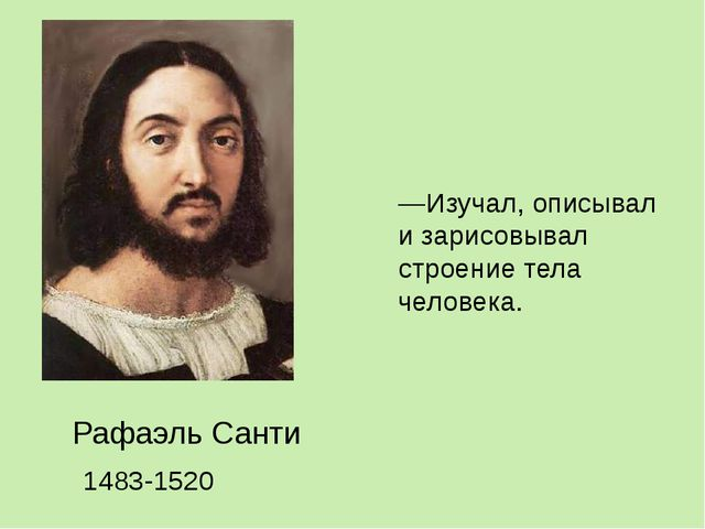 —Изучал, описывал и зарисовывал строение тела человека. Рафаэль Санти 1483-1520