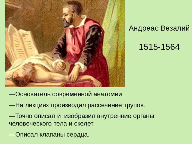 —Основатель современной анатомии. —На лекциях производил рассечение трупов. —...