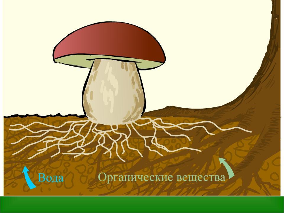 Flash-анимации по ботанике