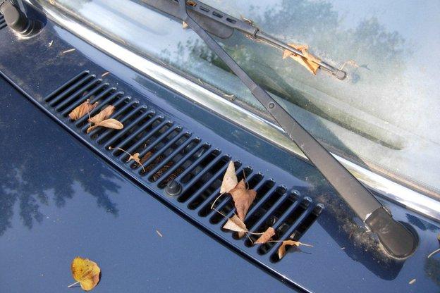 Nachdem die meisten Blätter nun gefallen sind, wird es Zeit, die Reste von ihnen an schwer zugängliche Stellen zu beseitigen. © SP-X