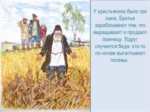 У крестьянина было три сына. Братья зарабатывают тем, что выращивают и продаю