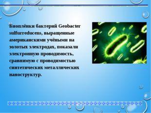 Биоплёнки бактерий Geobacter sulfurreducens, выращенные американскими учёными