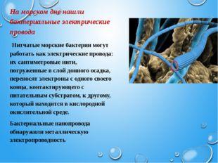 На морском дне нашли бактериальные электрические провода Нитчатые морские ба