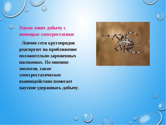 Пауки ловят добычу с помощью электростатики  Ловчие сети кругопрядов реагиру...